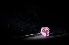 Het verwelken nam betekent verloren liefde, scheiding toe, of een slechte dode verhouding, nam op donkere achtergrond toe stock foto