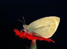 Het verzamelen van het insect stock foto's