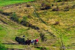 Het verzamelen van hooi in de Karpatische bergen Royalty-vrije Stock Fotografie