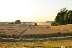 Het verzamelen van oogst op tarwegebied Stock Foto