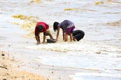 Het verzamelen van overzeese shell op strand stock afbeeldingen