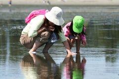 Het verzamelen van zeeschelpen Stock Afbeeldingen