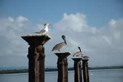 Het verzamelen zich van vogels Stock Afbeelding
