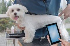 Het verzorgen het concept van de hondensalon klaar voor uw tekst royalty-vrije stock foto