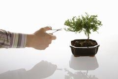 Het verzorgen van de bonsai Royalty-vrije Stock Afbeeldingen