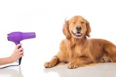 Het verzorgen van de hond Stock Foto