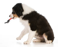 Het verzorgen van de hond Stock Afbeeldingen