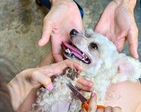Het verzorgen van de hond Royalty-vrije Stock Foto's