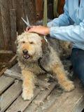 Het verzorgen van verdwaalde hond ââat de schuilplaats Royalty-vrije Stock Afbeeldingen