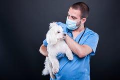 Het veterinaire het onderzoeken witte oor van de bichonhond stock foto's