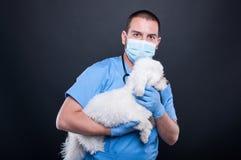 Het veterinaire stellen met witte bichonhond stock afbeelding