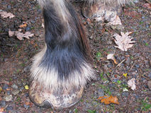 Het vetlokdetail van het graafschappaard Royalty-vrije Stock Foto