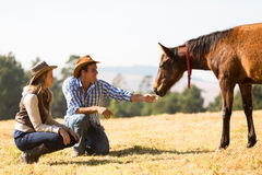 Het veulen van de cowboyveedrijfster Stock Fotografie