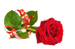 Het vieren Liefde - enige rood nam over wit toe Stock Afbeelding