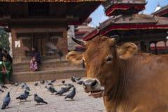 Het Vierkant van Durbar in Katmandu Royalty-vrije Stock Foto