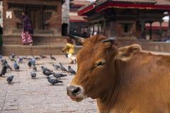 Het Vierkant van Durbar in Katmandu Stock Afbeelding