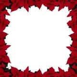 (Het vierkante) frame van poinsettia Stock Fotografie