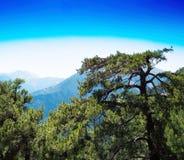 Het vierkante trillende landschap van de bergboom Stock Foto