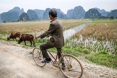 Het Vietnamese mens cirkelen door padievelden stock afbeelding