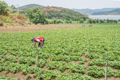 Het Vietnamese mens werken Stock Foto's