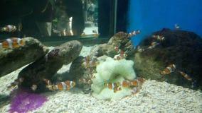 Het vinden van Nemo royalty-vrije stock fotografie