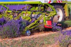 Het violette lavendelstruiken oogsten Mooie kleuren purpere lave stock fotografie