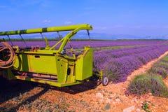 Het violette lavendelstruiken oogsten Mooie kleuren purpere lave stock foto