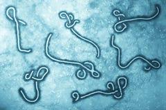 Het virus van Ebola Stock Foto