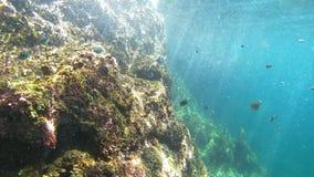 Het vissenleven onder het water stock fotografie