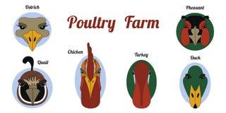Het vlakke landbouwbedrijf van het pictogramgevogelte royalty-vrije illustratie