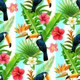 Het Vlakke Naadloze Patroon van de regenwoudtoekan Stock Afbeeldingen