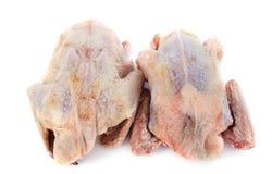 Het vlees van de patrijs Stock Foto