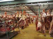 Het vlees van de slachthuiskoe het hangen Stock Fotografie