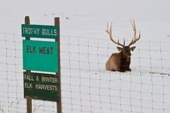 Het Vlees van elanden Royalty-vrije Stock Foto's