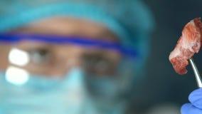 Het vleessteekproef van de laboratorium hulpholding in forceps, de analyse van de productkwaliteit, de uitvoer stock videobeelden