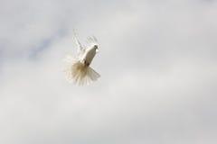 Het vliegen Stock Foto's