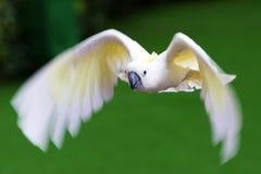Het vliegen Royalty-vrije Stock Foto's