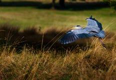 Het vliegen away Stock Foto