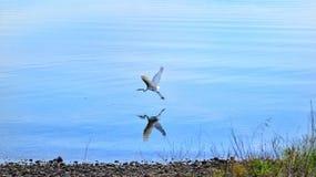 Het vliegen bezinning Stock Foto