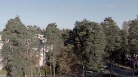 Het vliegen boven de bomen stock footage