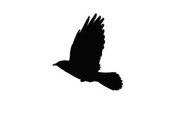 Het vliegen Daw vector illustratie