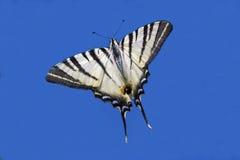 Het vliegen in de blauwe hemel Royalty-vrije Stock Foto