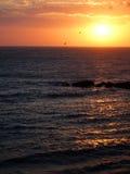 Het vliegen in de zonsondergang Stock Foto