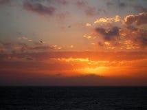 Het vliegen in de zonsondergang Stock Foto's