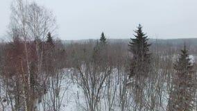 Het vliegen laag over een snow-covered open plek met struiken en sparren in bewolkte dag stock video