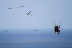 Het vliegen met Pelikanen Royalty-vrije Stock Foto's