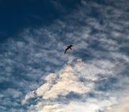 Het vliegen onder de wolken royalty-vrije stock afbeeldingen