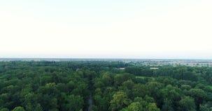 Het vliegen over bosbomen Aard - Luchtmeningen stock video