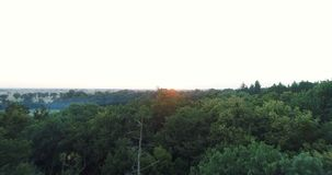 Het vliegen over bosbomen Aard - Luchtmeningen stock videobeelden