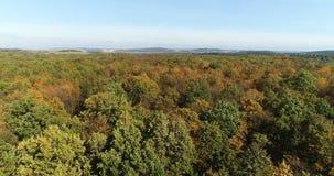 Het vliegen over bosbomen Aard - Luchtmeningen stock footage